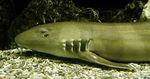 Акула на дне