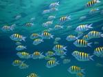 Большое кол-во рыб