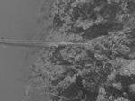 Черно-белое фото Острозубого угря