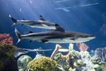 Ночная акула в поиске