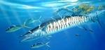 Симпатичная рыба Ваху