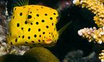 Рыба на дне