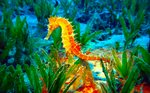 Яркий морской конек
