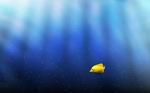 Очаровательное фото Желтой зебросомы