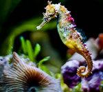 Симпатичный Морской конек