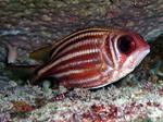 Симпатичная рыба-белка