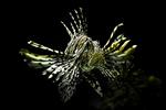 Рыбка в темной глубине