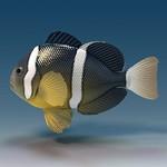 Нарисованная Рыба-клоун