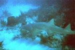 Вечернее фото рыбы-пилы