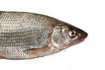 Лицо рыбы нас