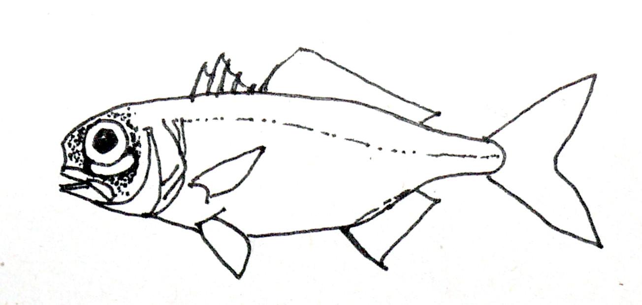 Фонареглазая рыба фото