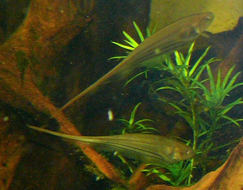 Стеклянная рыба нож фото