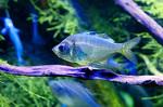 Стеклянная рыба
