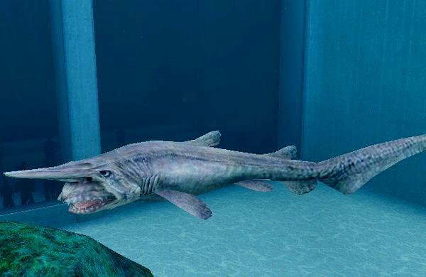 акула кунья фото