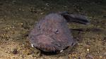 Удильщиковая рыба на песке