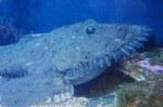 Удильщиковая рыба на дне