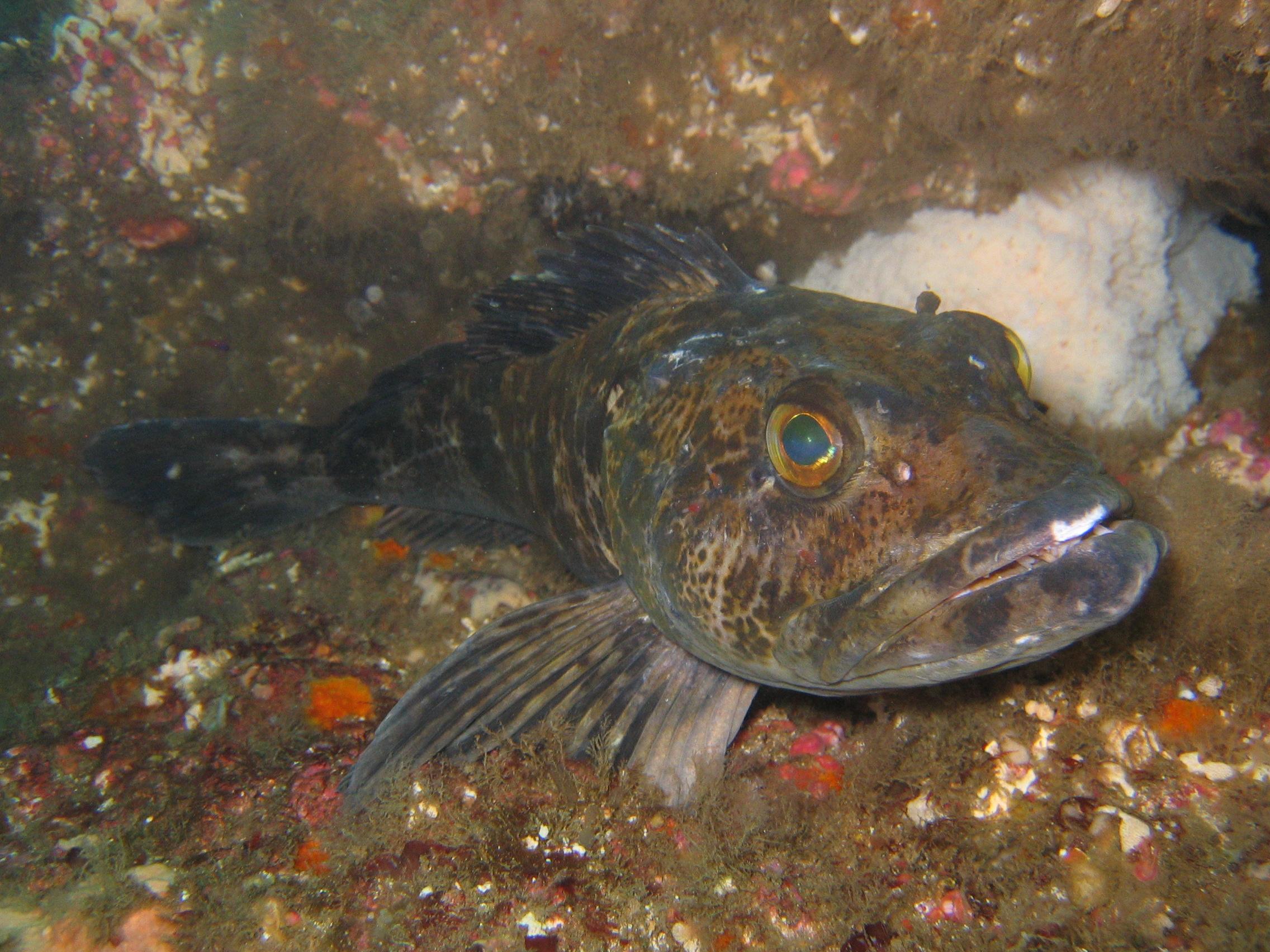 Отчёты о рыбалке 2018краткие  Отчеты о рыбалке  АРК