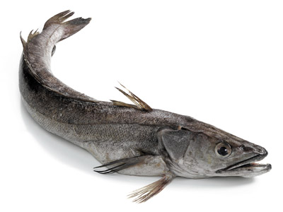 рыба ханос фото