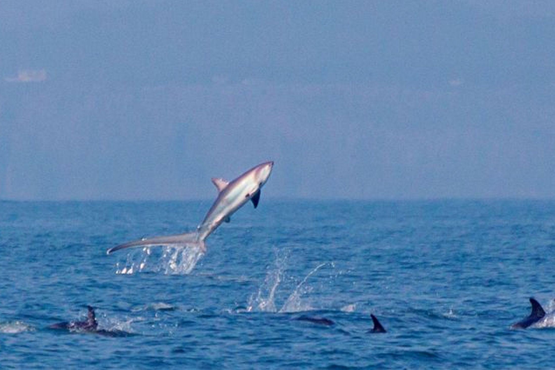 Прыгающая акула-лисица - фото и обои. Красивая картинка ... Латимерия