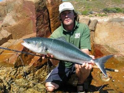 Австралийский лосось фото