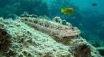 Ящероголовая в океане