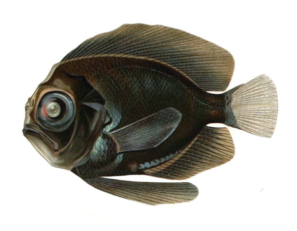 Каристовая рыба фото