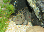 Рыба с лицом обезьяны в зоопарке