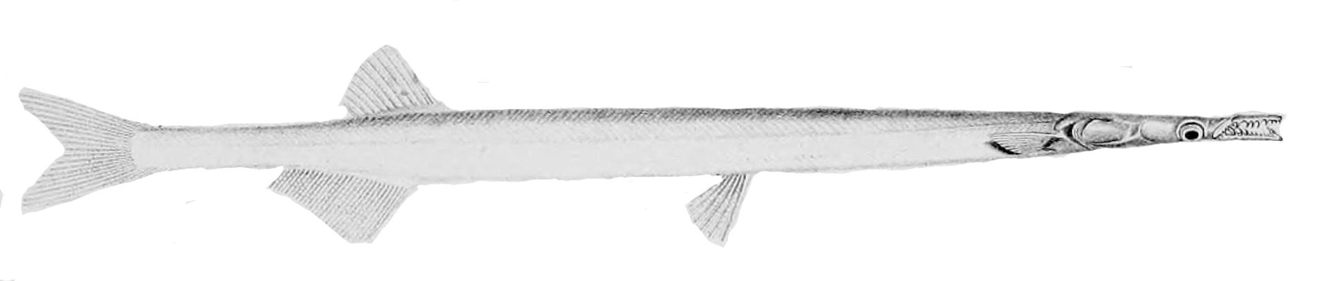 Лапша-рыба фото