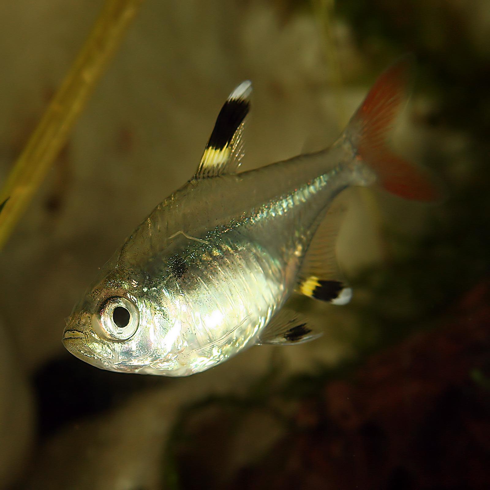Рыбки в попке