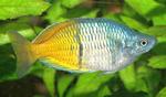 Рыба-радуга в траве