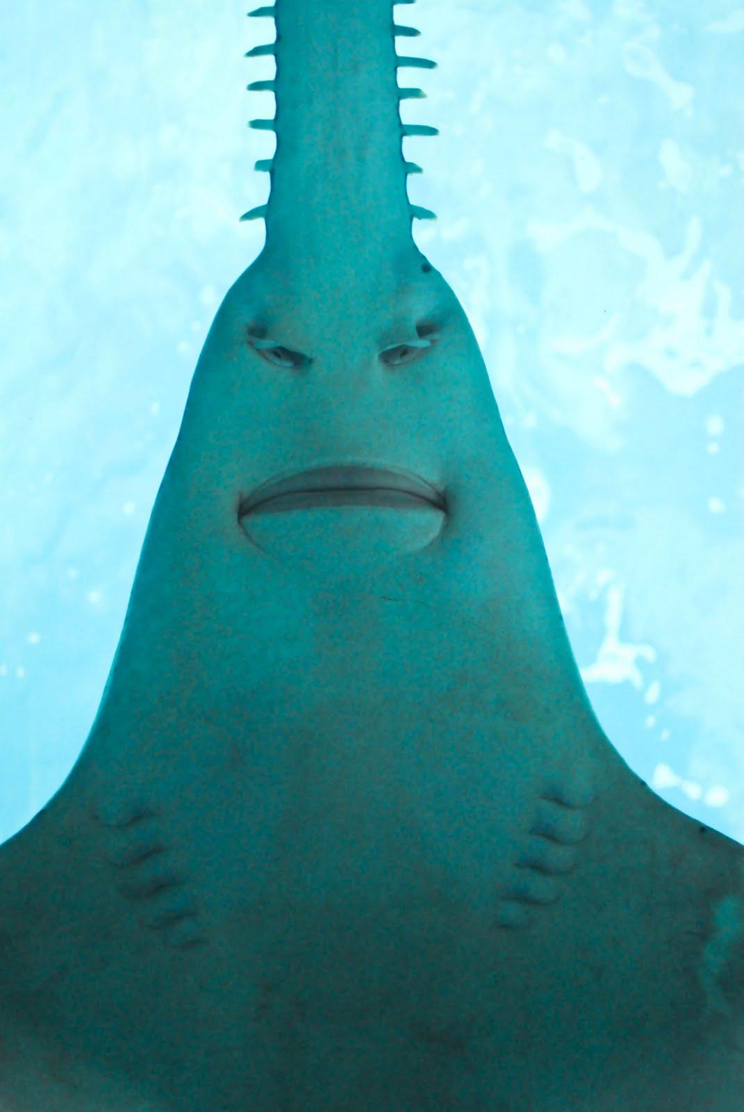 толстолобик в океане