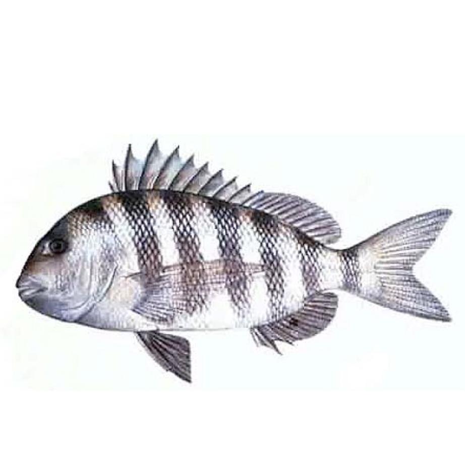 фото рыб окунь