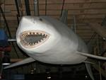 Лицо шестижаберной акулы