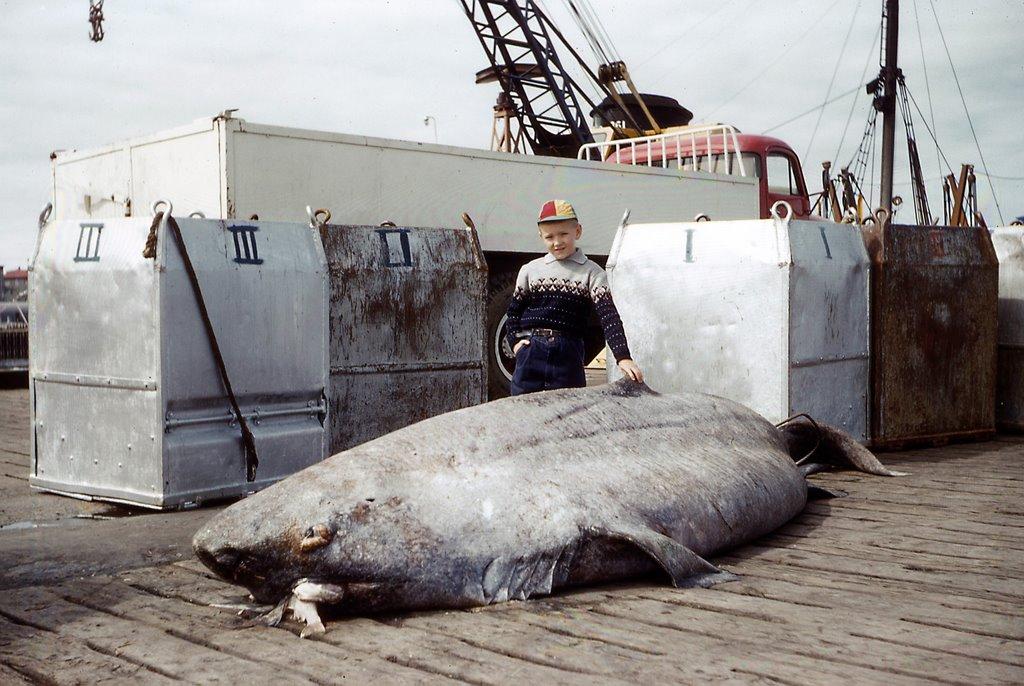 Полярная акула фото