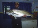 Рыба породы алет