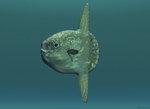 Портрет луны-рыбы
