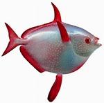 Портрет солнечной рыбы