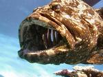 Изовая рыба в воде