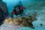 Ковровая акула и водолаз